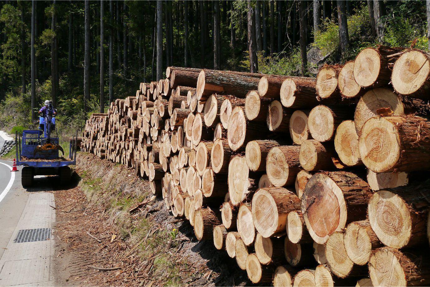 伐採し並べられた木材の写真