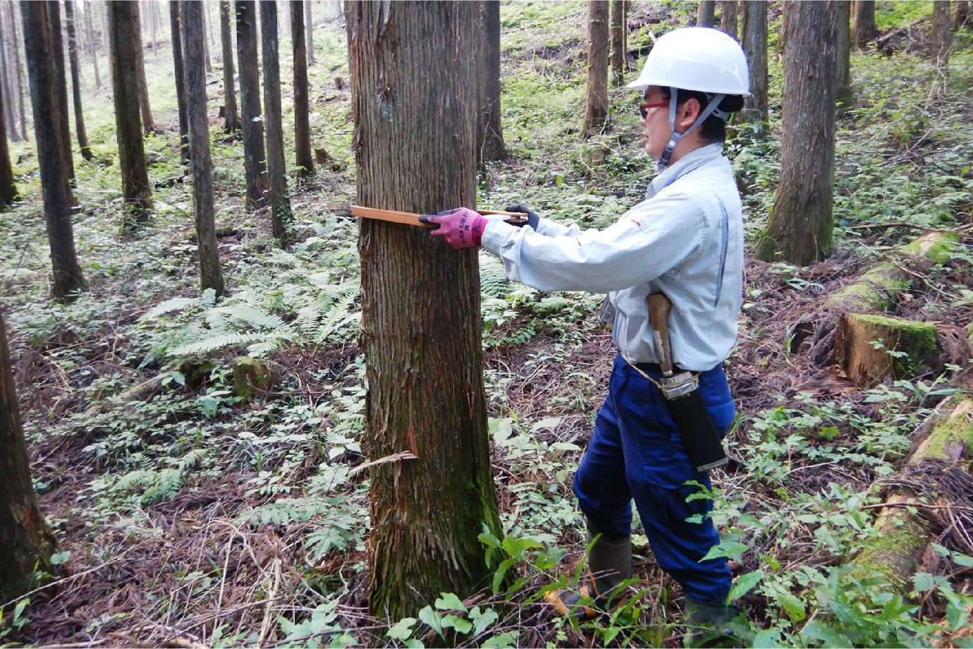 Iさんが森林の調査をしている写真
