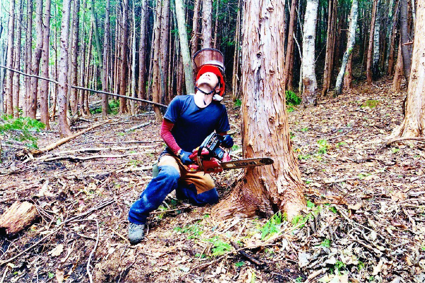 Fさんがチェンソーで木を切っている写真